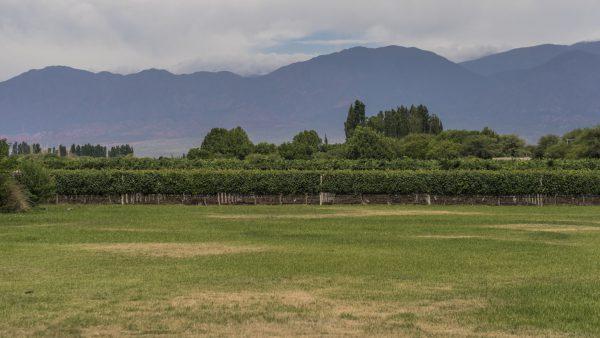 Argentina Photography Places Vineyard_Cafayate
