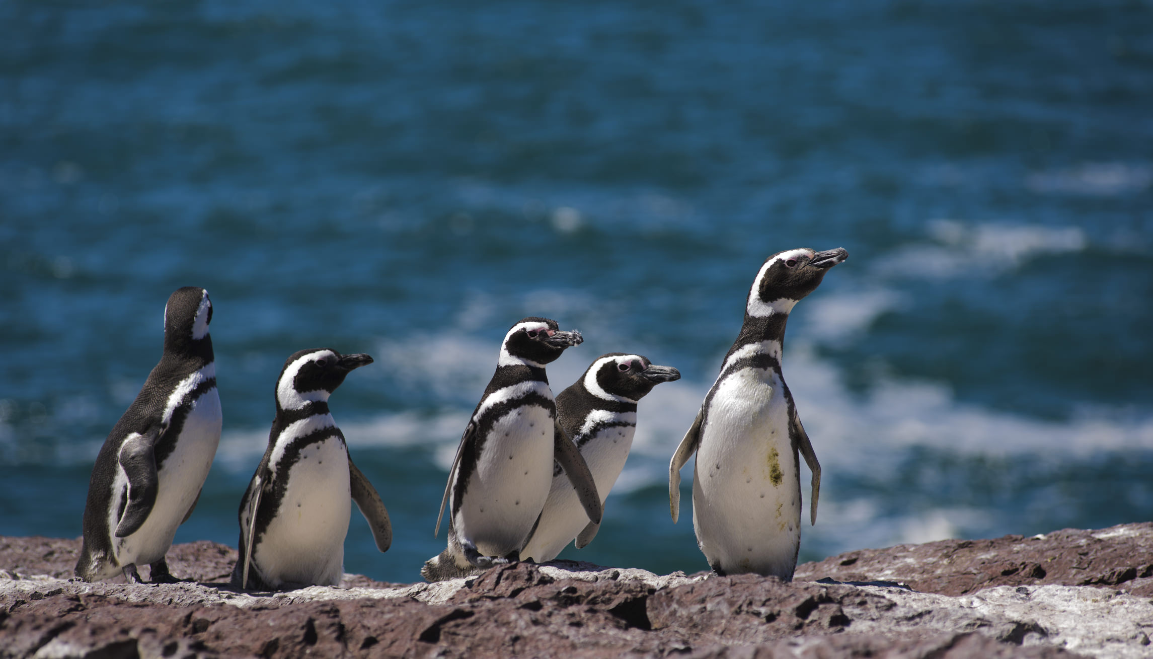Patagonia photography Monte Leon National Park Argentina  Santa Cruz penguins on the shore