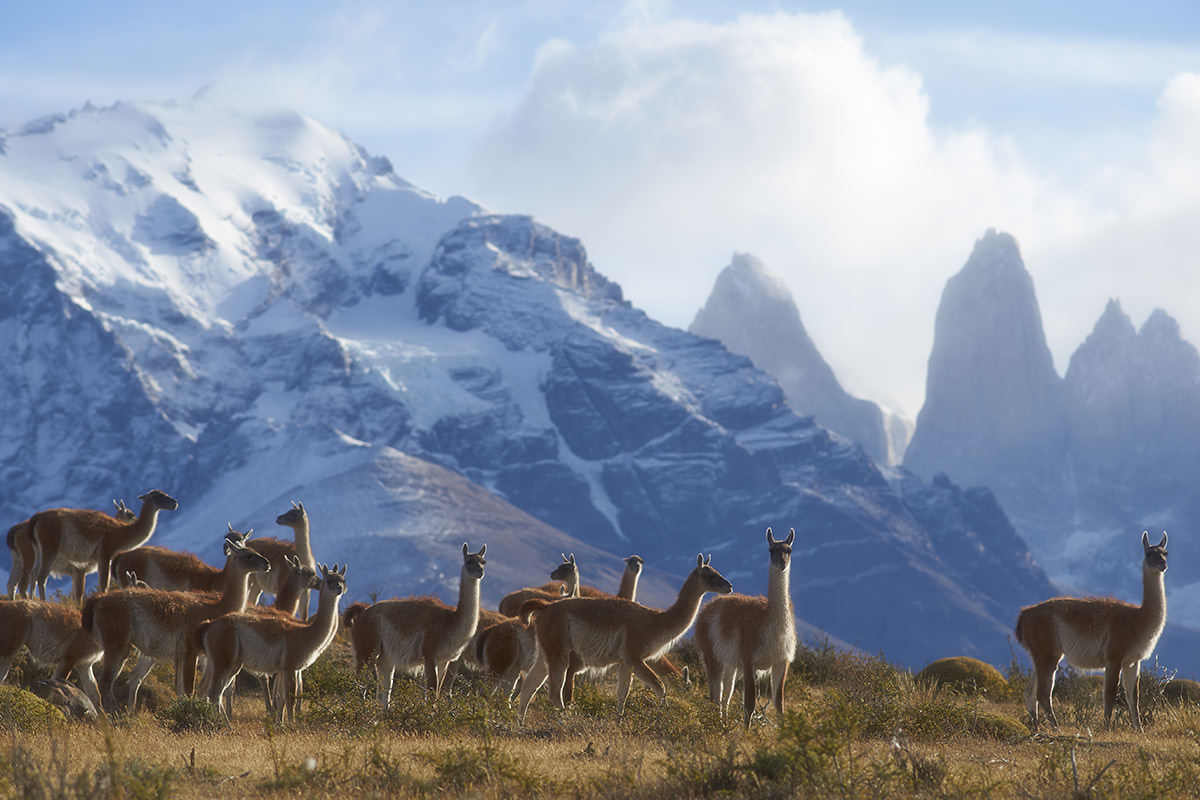 Monte_Leon_National_Park_Patagonia_photography_tour_Guanacos