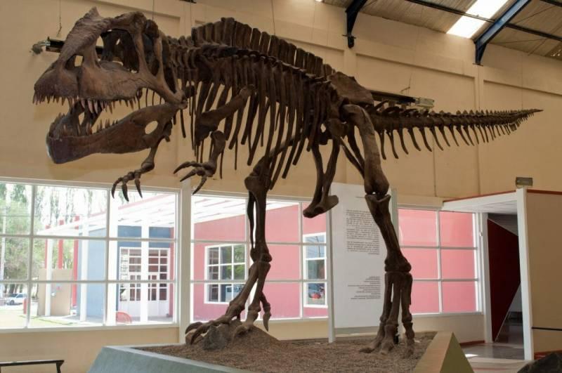 Patagonia Photography Museum Patagonia Dinosaurs